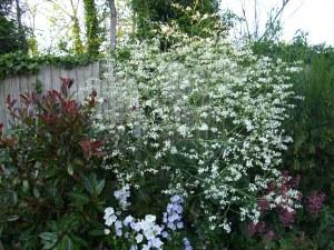 white plant in garden