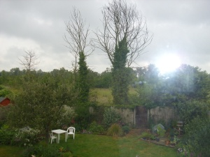 garden with trees - june 10th 09