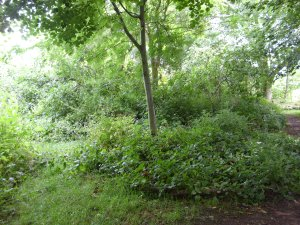 woodland at ryton