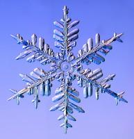 snowflake 5