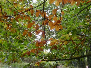 sept 28th autumn leaves